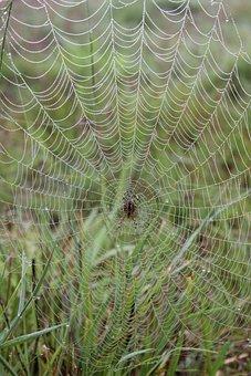 Cobweb, Spider, Dew, Spider Web, Web, Arachnid