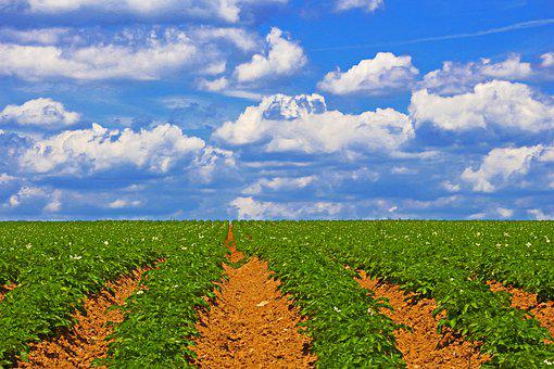 Field, Plantation, Agriculture, Season, Spring, Nature