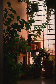 Balcony, Plants, Potted Plants, Garden, Floral, Border