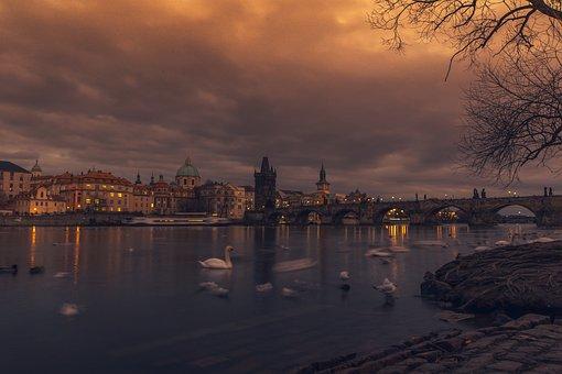 Bridge, River, Swans, Famous, Tree, Scene, Waves, Water