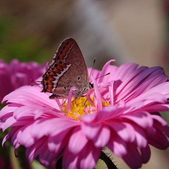 Butterfly, Flower, Insect, Wings, Plant, Petals