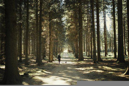 Forest, Nature, L, Landscape, Woods, Path, Road, Trail