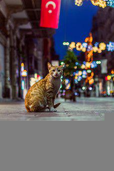 Cat, Feline, Street, Road, Animal, Stray, Kitten, Furry