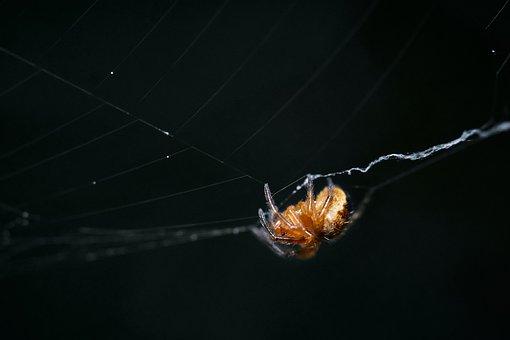 Spider, Arachnid, Spiderweb, Cobweb, Web, Animal
