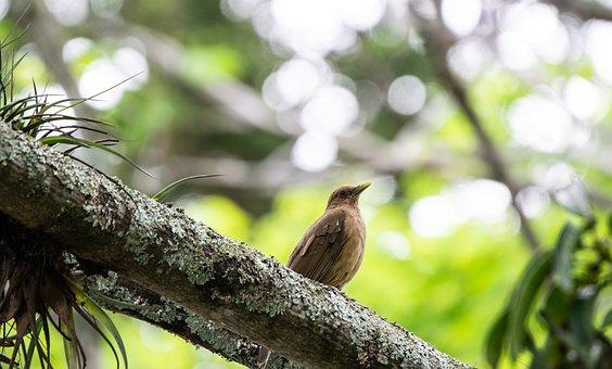 Bird, Beak, Feathers, Plumage, Avian, Ornithology