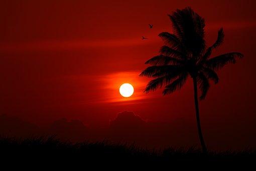 Sunset, Palm Tree, Silhouette, Birds, Evening, Goa