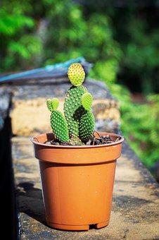 Cactus, Plant, Pot, Garden, Potted Plant, Plant Pot