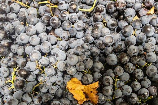Grapes, Fruits, Fresh, Produce, Harvest, Organic