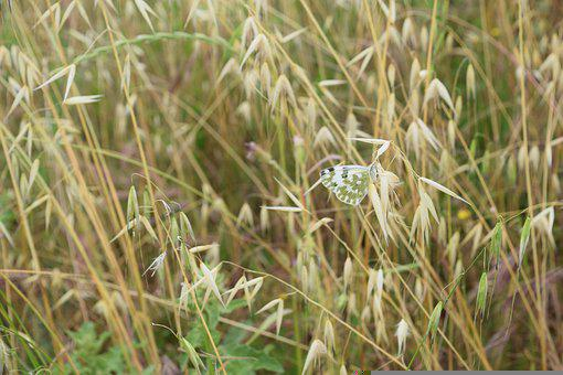 Butterfly, Field, Nature, Spring, Summer, Yellow, Grass