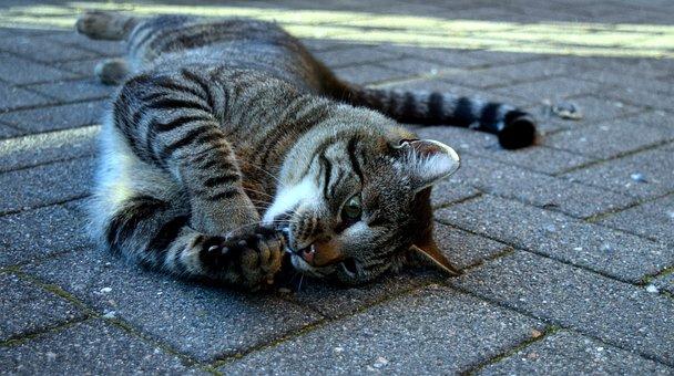 Cat, Hunt, Prey, Eat, Animal World