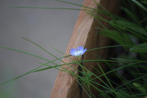Wildflower, Blue, Nature, Spring, Bloom, Flowers