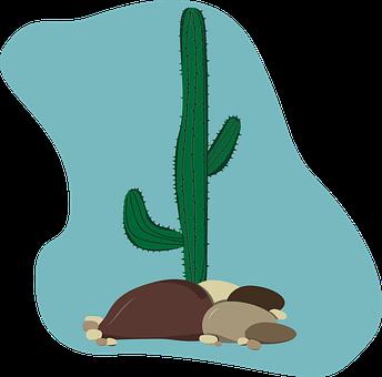 Cactus, Illustration, Vector, Design, Desert, Plant