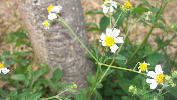 Flowers, Chamomile, Nature, Mexico, Park