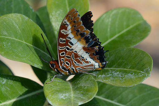 Butterfly, Green, Insect, Wing, Flying, Tree, Nature