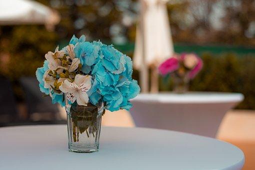 Flowers, Nature, Spring, Color, Flora, Flower