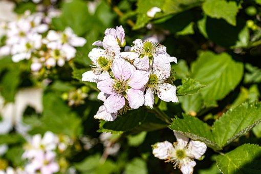 Ornamental Plants, Shrub, Bush, Bloom, White, Flower