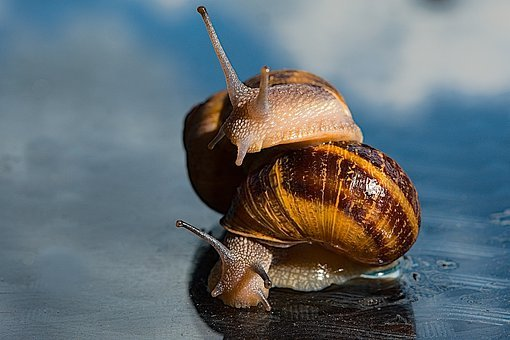 Homophobia, Snail, Animal, Nature, Shell, Clam, Slowly