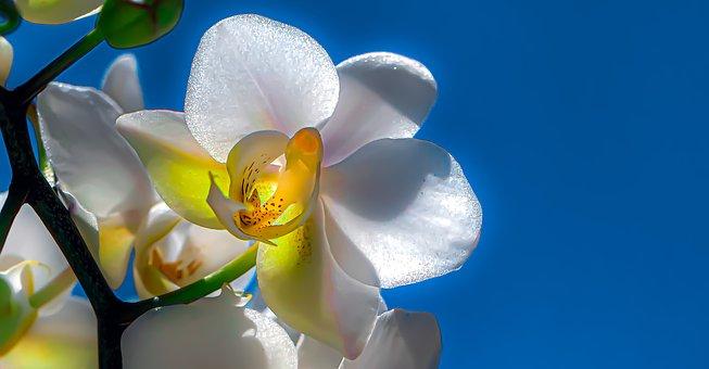 Orchid, Just Flower, Bloom, Violet, Petals, Fragility