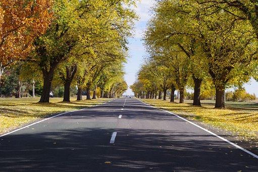 Autumn, Trees, Street, Avenue, Tree Lined, Fall, Nature