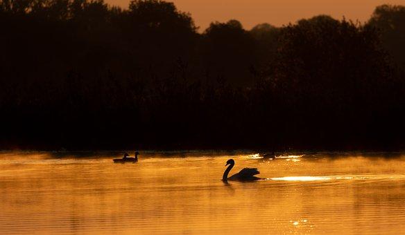 Swan, River, Sunrise, Riverbank, Fog, Silhouette