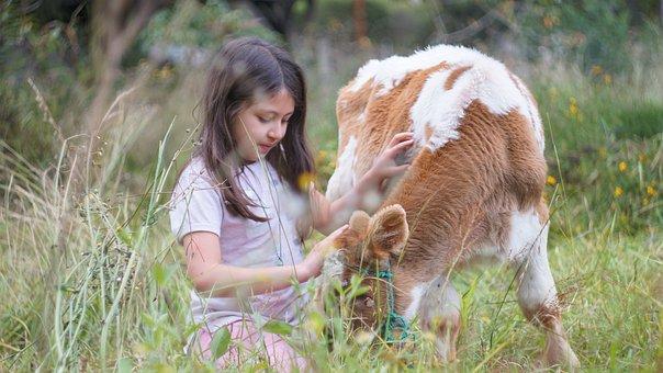 Girl, Cow, Calf, Pet, Kid, Young Girl, Farm Animal