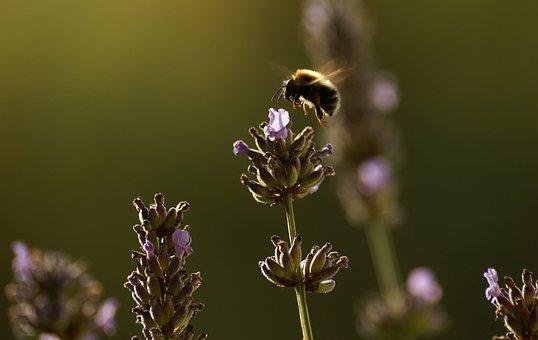 Bee, Flower, Pollen, Pollination, Sunset, Evening