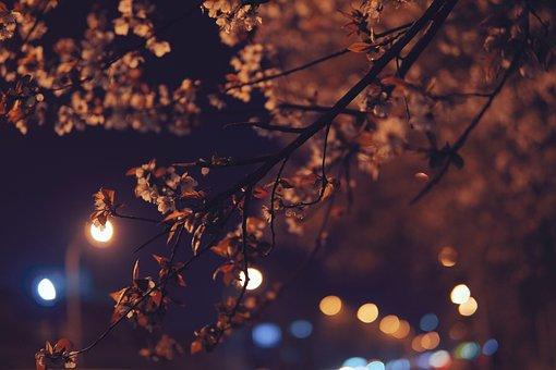 Cherry Blossom, Street, Bokeh, Lights, Flowers, Bloom