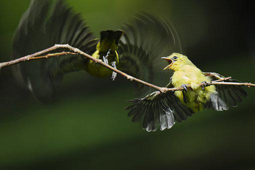 Birds, Fledgling, Mother And Child, Young Animal, Aves