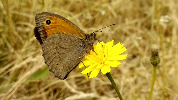 Butterfly, Yellow Flower, Pollinate, Pollination