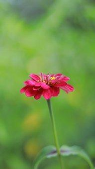 Flower, Chrysanthemum, Calendula, Garden, Dahlia, Bloom
