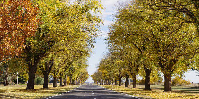 Trees, Road, Highway, Leaves, Foliage, Autumn, Fall