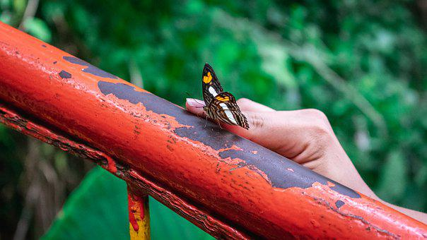 Butterfly, Insect, Metal, Wings, Nature, Closeup, Bug