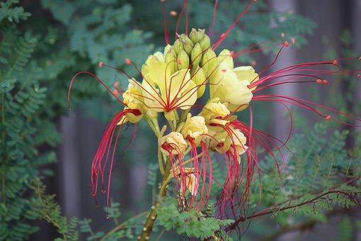 Flowers, Petals, Leaves, Plants, Tropical, Nature