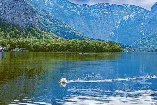 Mountain, Swan, Trees, Forest, Water, Fall, Outdoors