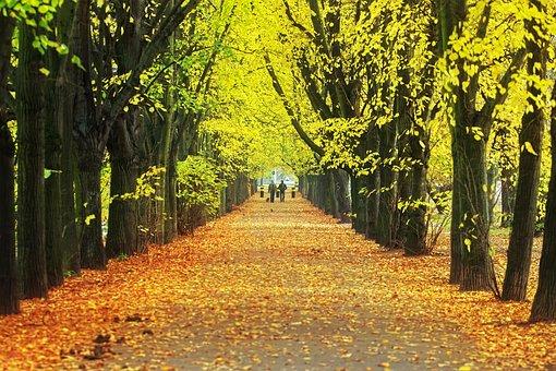 Fall, Trees, Avenue, Park, Path, Road, Leaves