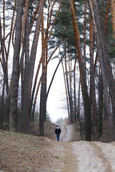 Road, Forest, Man, Pine Trees, Trail, Path, Traveler