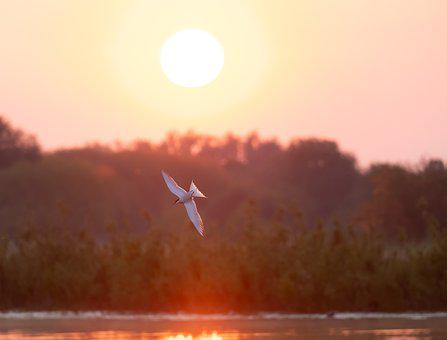 Sunrise, Bird, Flight, River, Trees, Riverbank, Fog
