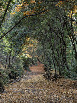 Forest, Trees, Road, Trail, Path, Leaves, Woods