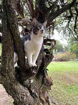 Cat, Pet, Tree, Animal, Domestic Cat, Feline, Mammal