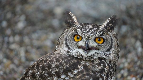 Owl, Bird, Eagle Owl, Eyes, Portrait, Close Up, Animal