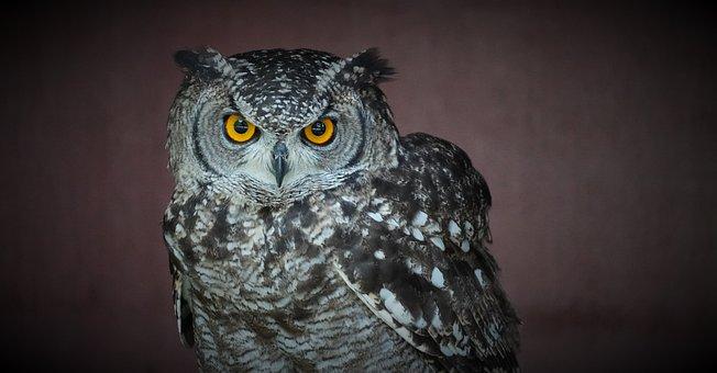 Owl, Eagle Owl, Bird, Owl Eyes, Bill, Feather, Plumage