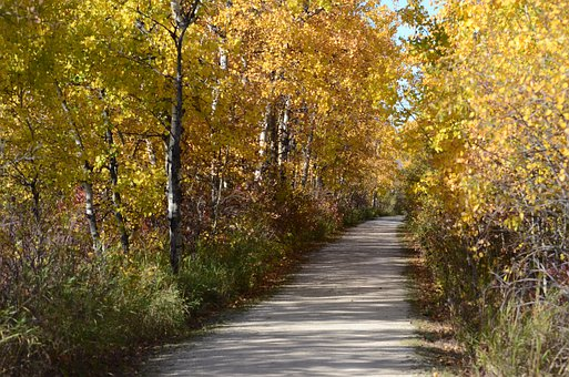 Forest, Trees, Path, Road, Pathway, Woods, Landscape