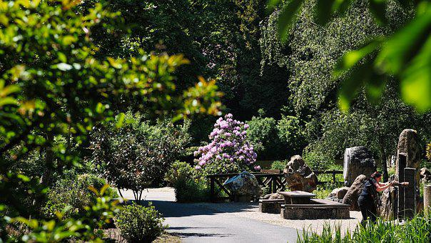 Park, Garden, Photographer, Photographing, Camera