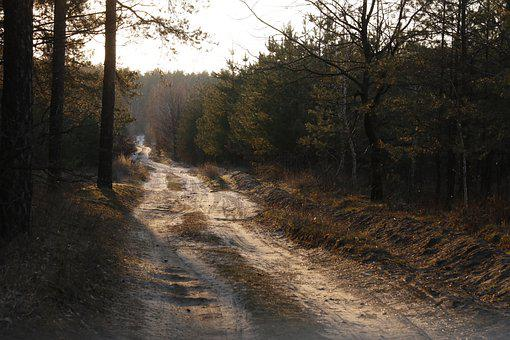Forest, Road, Sunset, Trail, Path, Pine, Conifers