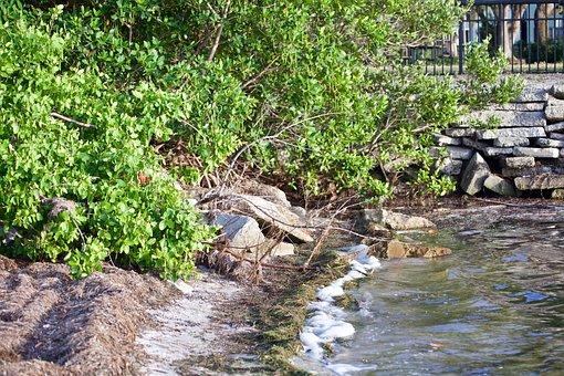 Bushes, Shore, Water, Beach, Trees, Coast, Nature, Bush