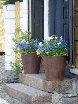 Flowers, Plant Pot, Door, Stairs, Steps, Entrance