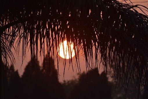 Sunset, Sun, Leaves, Silhouette, Sunrise, Sunlight