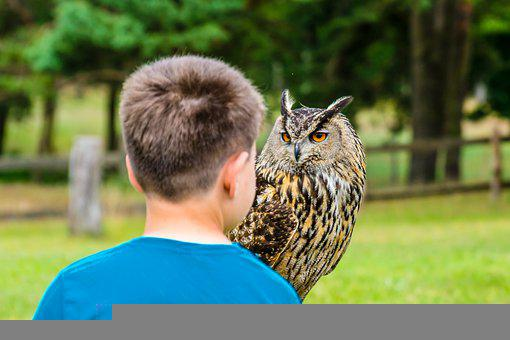 Siberian Eagle-owl, Boy, Child, Watching, Attention