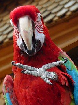 Parrot, Claw, Foot, Ara, Animal, Bird, Parroting
