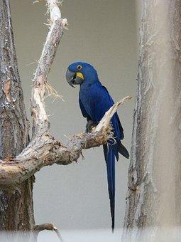Parrot, Zoo, Bird, Plumage, Ara, Beautiful, Blue, Talk